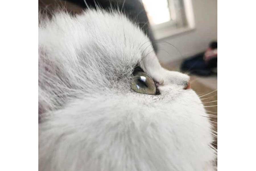 アニメがそのまま実写化されたようなキラキラおめめの小梅ちゃん【写真提供:こてつとこうめ(@kotechan0405)さん】