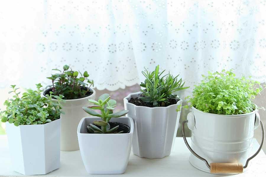 運気を引き上げるための花や観葉植物の飾り方とは?(写真はイメージ)【写真:写真AC】