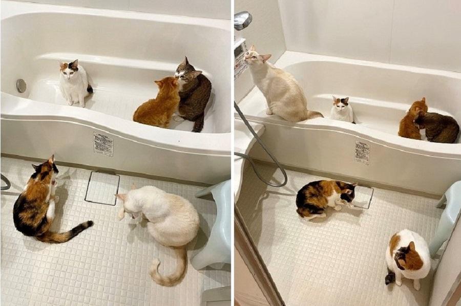 浴室乾燥機を付けた途端、大混雑! みんなブラッシングが大好きなのだそう【写真提供:ふくてん(@zEChPHPqG2t32nT)さん】