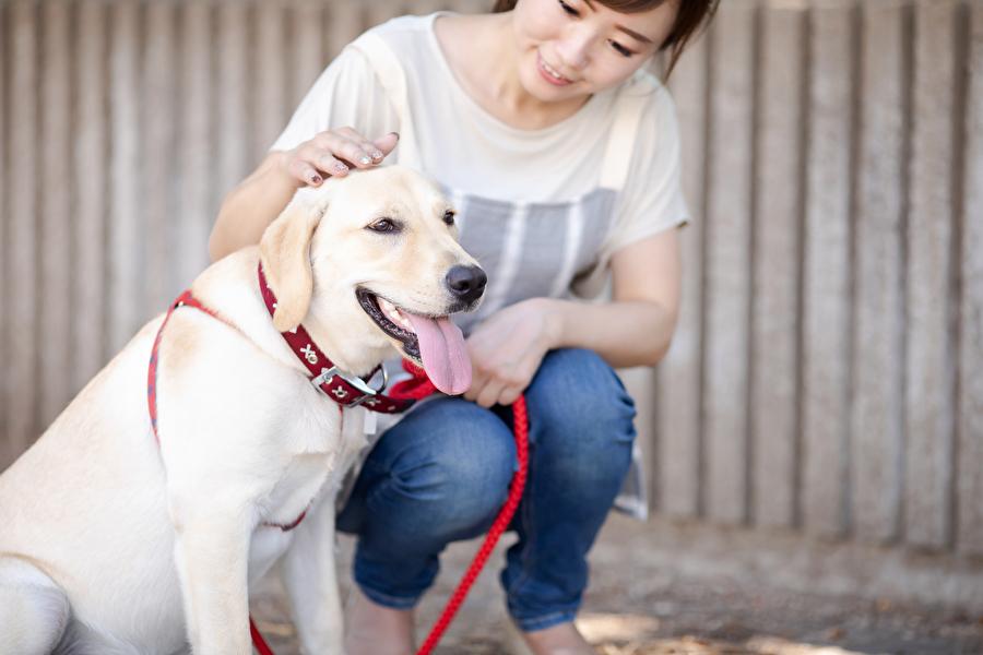 愛犬の事故防止にも一役買っているリード(写真はイメージ)【写真:写真AC】