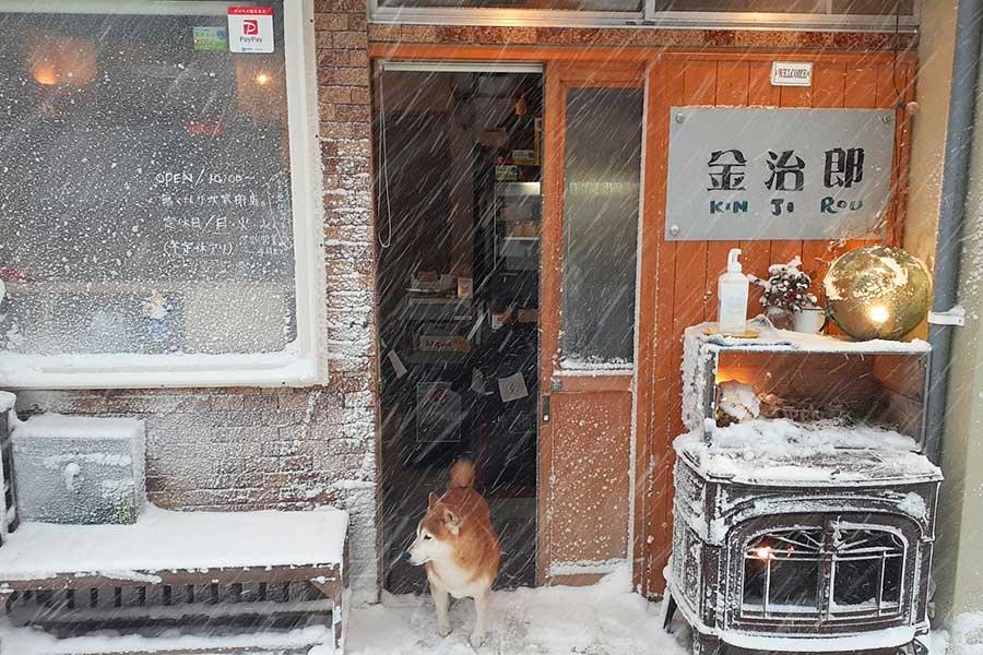 青森県にある「あさむし温泉プリン 金治郎」で店長犬として勤務中!【写真提供:のんた(@nontang18)さん】