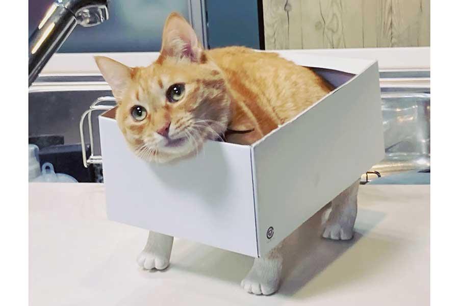 飼い主さんお手製の猫足ボックスに入るシバちゃん【写真提供:サユヤス(@SHAKEhizi_BSK)さん】
