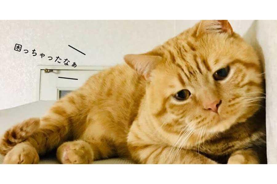 世界のファンは7万人。しょんぼりおめめがかわいいアランくん【写真提供:困り顔のアランくん(kiko11232015)】
