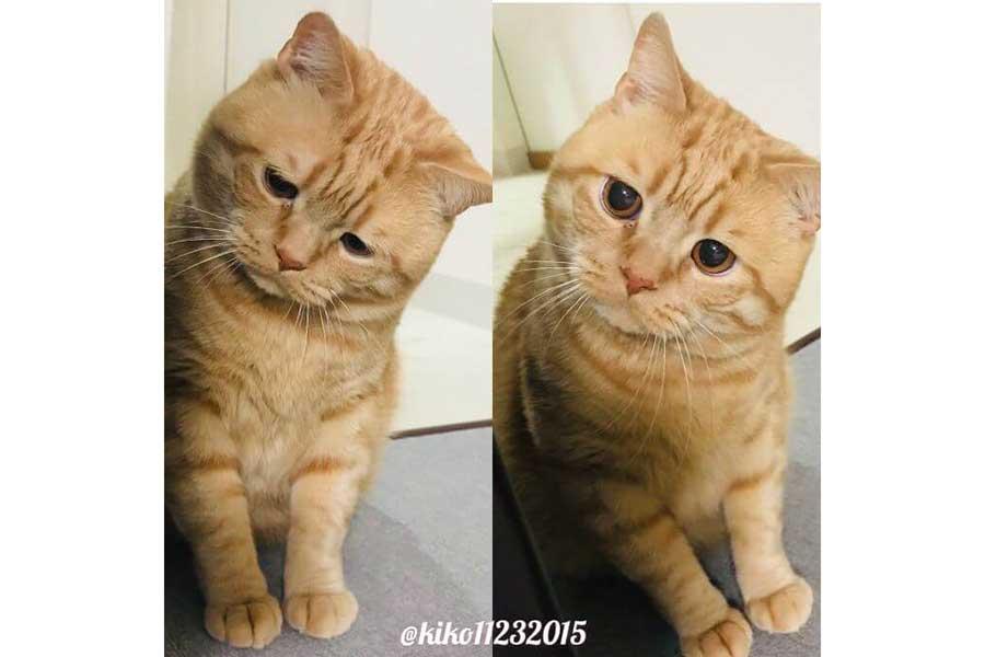 困り顔といつもの顔のアランくん。小首を傾げる姿がかわいすぎる!【写真提供:困り顔のアランくん(kiko11232015)】