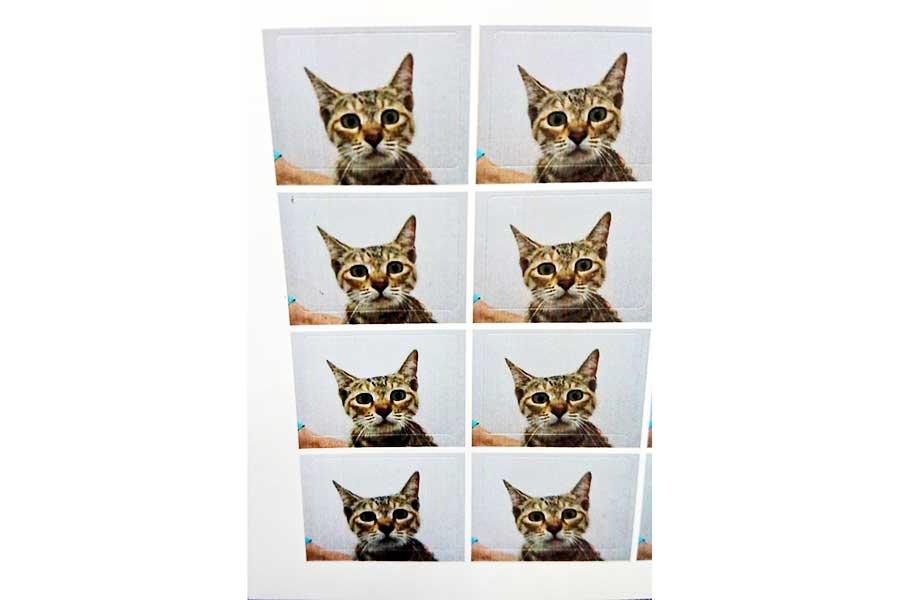 ベルちゃんのちょっぴり不安げな表情が話題に。動物病院からプレゼントされた予防接種時の写真【写真提供:むむむ(むっちゃん)(@mu_chan1030)さん】