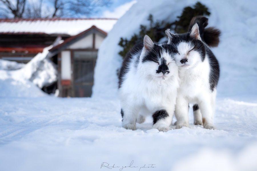 雪が溶けそうな勢いを感じます【写真提供:Riku(@riku_photo0806)さん】