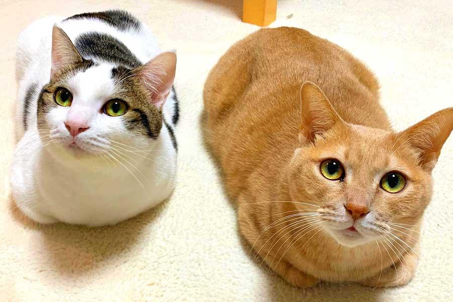 (左から)豆大福くんとひのきちゃん【写真提供:ひのき猫(@nekohinoki)さん】