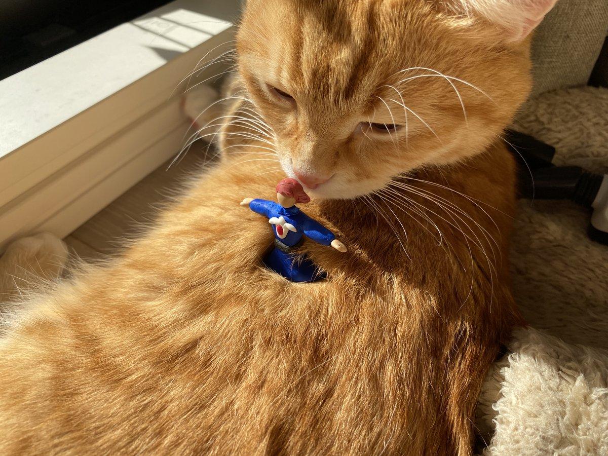 「その者青き衣をまといて金色の猫に降り立つべし」と添えられた写真。正体は何とねこの背中!?【写真提供:ねこのぽぅ(@nekono_paw)さん】