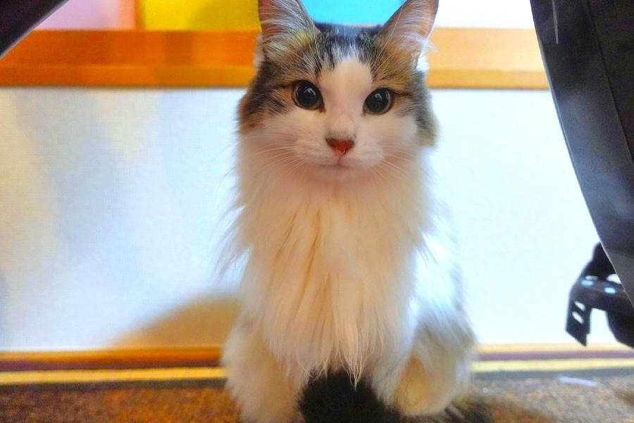 元保護猫の「ヒメ」ちゃん。小笠原家で幸せな毎日を送っている【写真:小笠原瑛作】