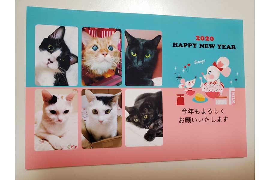 愛猫が集結した年賀状。亡くなった子の姿も【写真提供:せんだみつお】