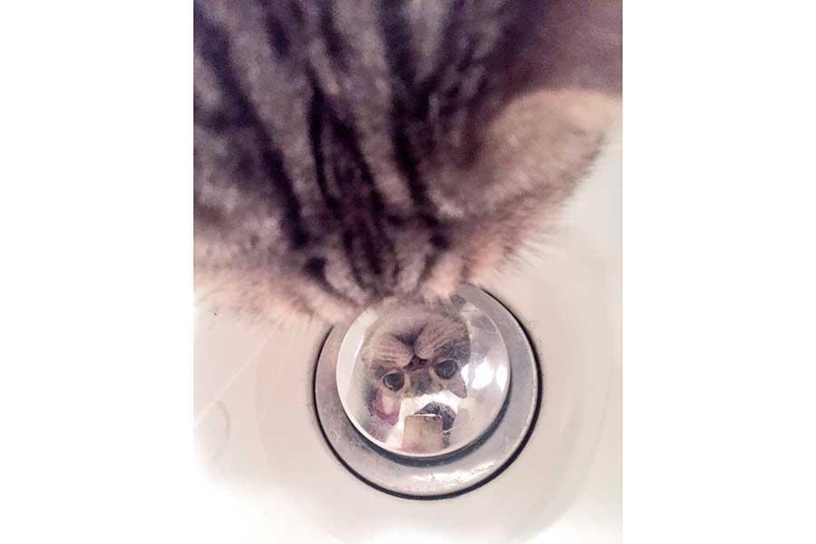浴室で何やら覗き込んでいたおっさんくん。何を見ているかというと……【写真提供:しるそば(@Munchneko)さん】