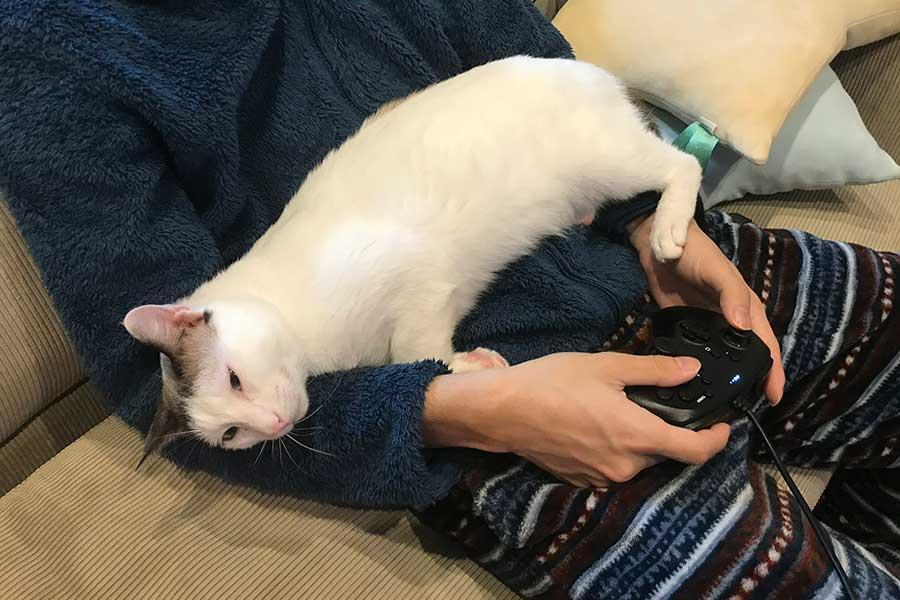 飼い主さんがゲームをしていても関係なし。べったりと甘えます【写真提供:つくね&ひまり@新米パパ始めました(@tsukune216)さん】
