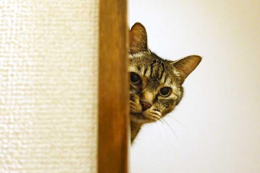 階段から様子をうかがうレオンくん。でも人見知りとは真逆なのだとか【写真提供:小笠原瑛作】