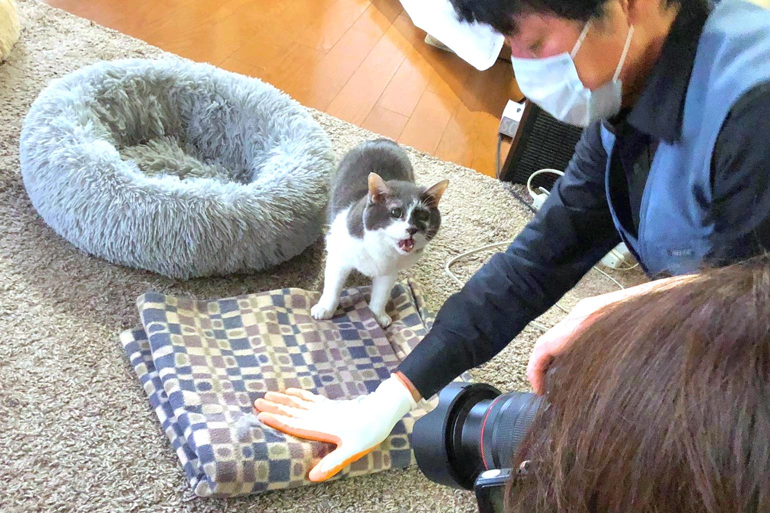 カメラマンの愛猫が必死に何かを訴える、話題の一枚【写真提供:猫雑誌編集者(ペット栄養管理士)@NekoG_staffさん】
