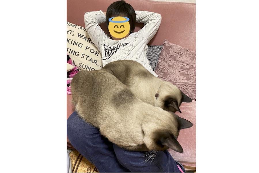 総重量は12キロ。話題となったMariaさんの三男と2匹の愛猫、手前がブランくん、奥が小次郎くん【写真提供:Maria cat mam(@mariamam1116)さん】