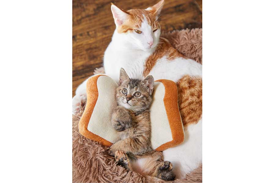見た目も贅沢な「サブウェイ」のダブル猫サンド ※嘘です【写真:日本サブウェイ合同会社】