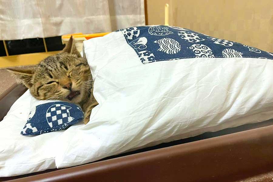 ねこ用お布団でスヤスヤと眠る元保護ねこ、しめじちゃん【写真提供:a2c(@a2c_S1000RR)さん】