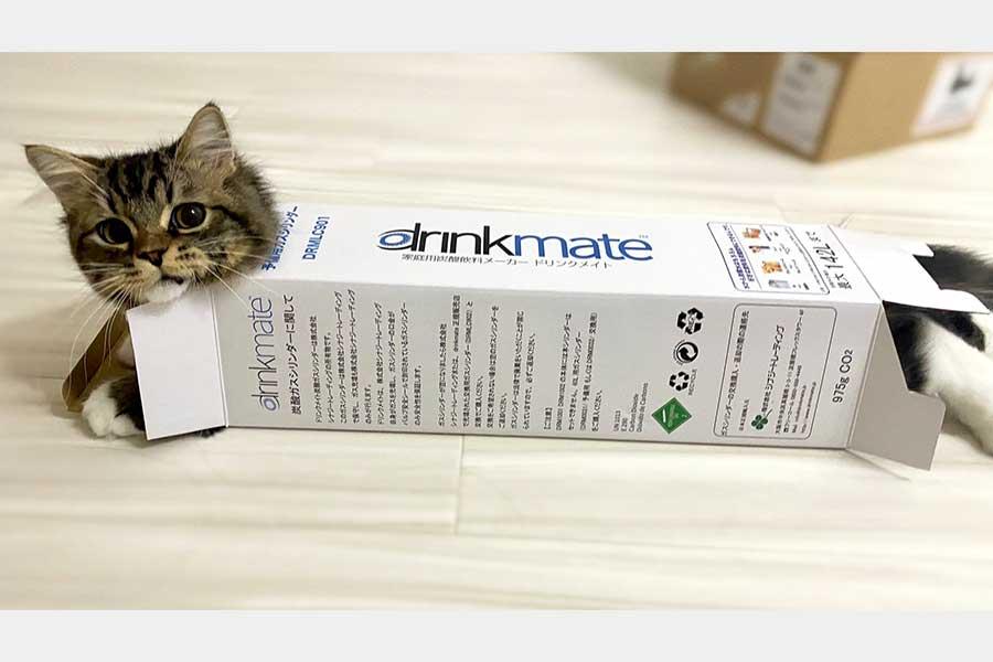 シリンダーが入っていた空き箱にジャストフィットしたメルくん【写真提供:めるちょ(@meltube_cat)さん】