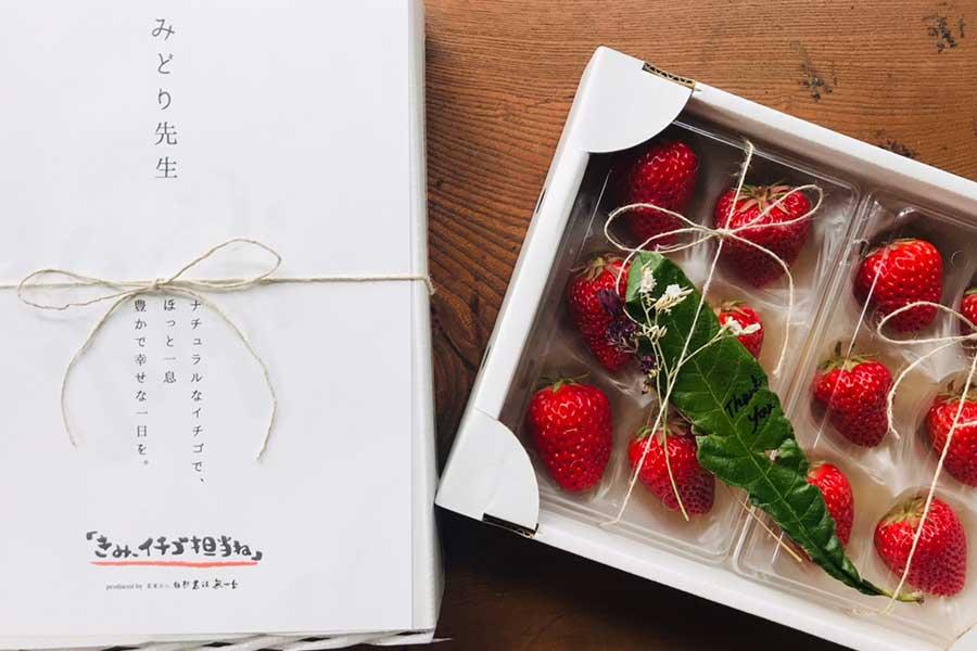 全国的にほぼ前例のない無農薬・無化学肥料栽培で渡辺さんが生産したイチゴ【写真提供:渡辺葉月】