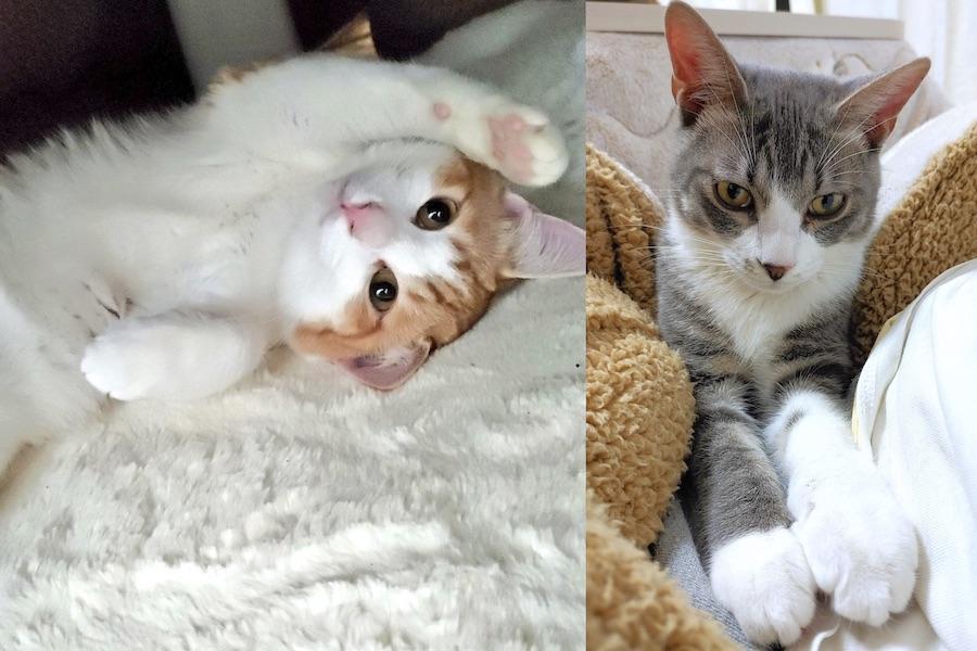 おっとりなモナカ君(左)とやんちゃで活発なごうくん(右)【写真提供:保護猫家族(@neko9wan2)さん】