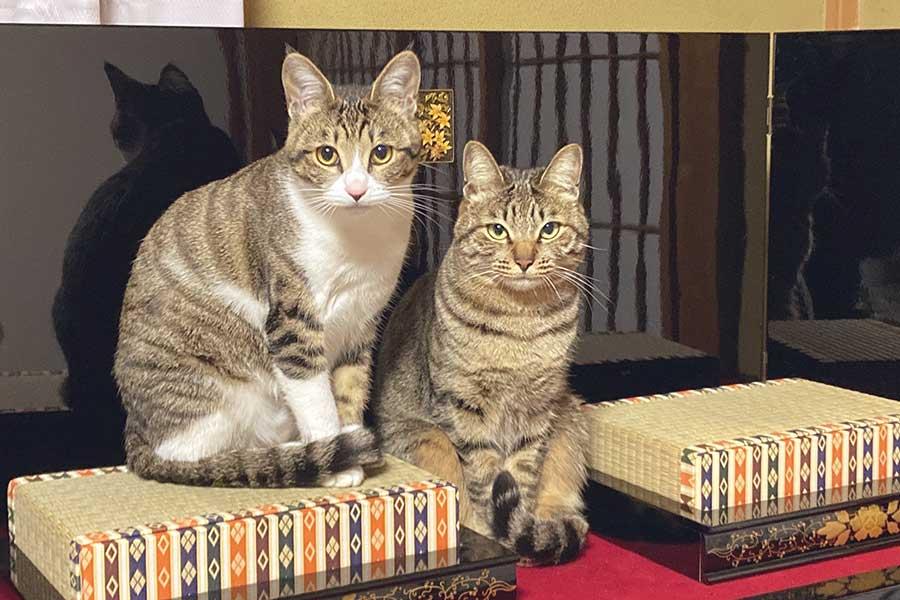チャチャちゃん(右)はかまってほしいももこちゃん(左)から逃げるものの結局は仲良くくっついているのだそう【写真提供:らいちとももこ(@raichi_cat_game)さん】