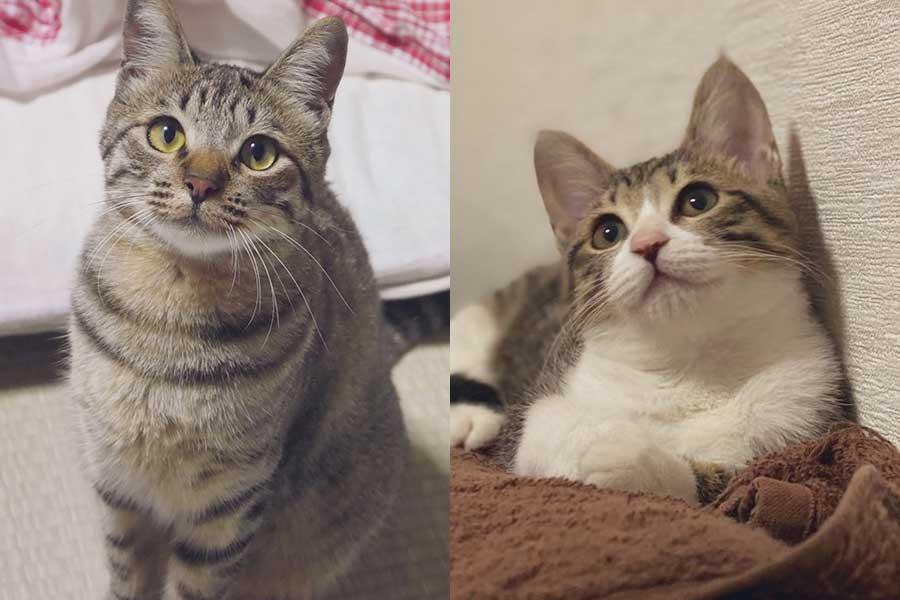 左がおっとりなお姉ちゃんのチャチャちゃん。右はやんちゃな妹、ももこちゃん【写真提供:らいちとももこ(@raichi_cat_game)さん】