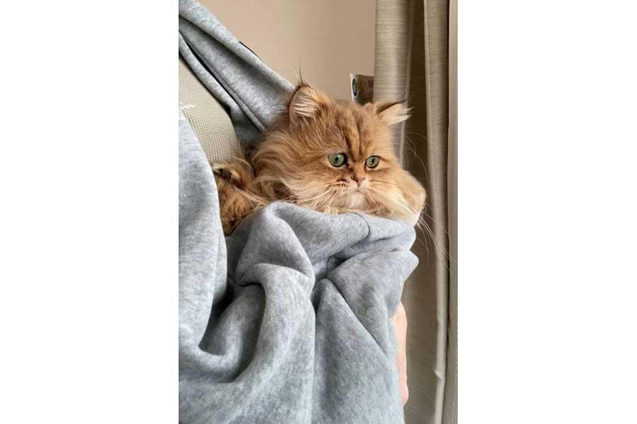 抱っこ紐にすっぽり収まったむふぁたんくん【写真提供:触角猫むふぁたん(@mofumofumufatan)さん】