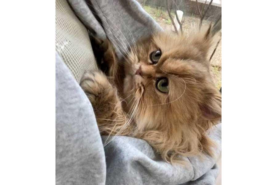「ママ」と呼ぶ声が聞こえてきそう?【写真提供:触角猫むふぁたん(@mofumofumufatan)さん】