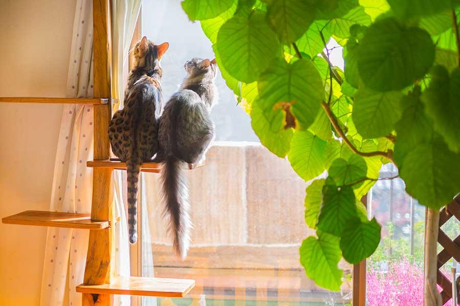 家庭円満を望むなら悪い気を吸ってくれる観葉植物を南に配置(写真はイメージ)【写真:写真AC】