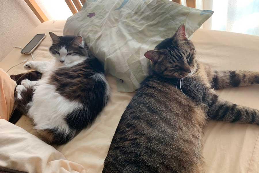 瑛作選手のベッドでくつろぐヒメちゃん(左)とレオンくん(右)【写真提供:小笠原瑛作】
