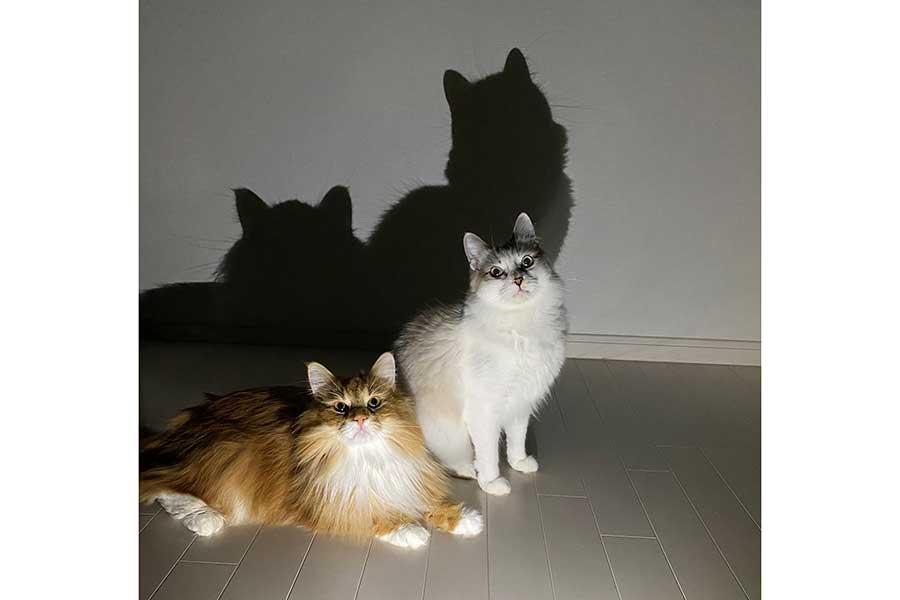 別角度もなかなかな表情です【写真提供:さとう@猫ぼっこ(@necobokko)さん】