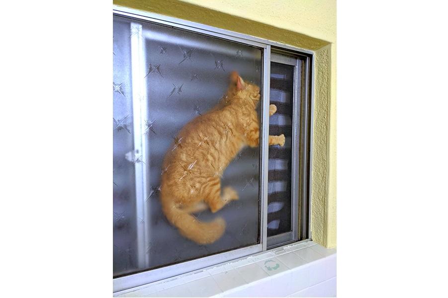 """「どういう状況」? 窓の向こうで""""切り絵""""状態になってしまったゆきくん【写真提供:検知穴詰男(@tomokimusi9)さん】"""
