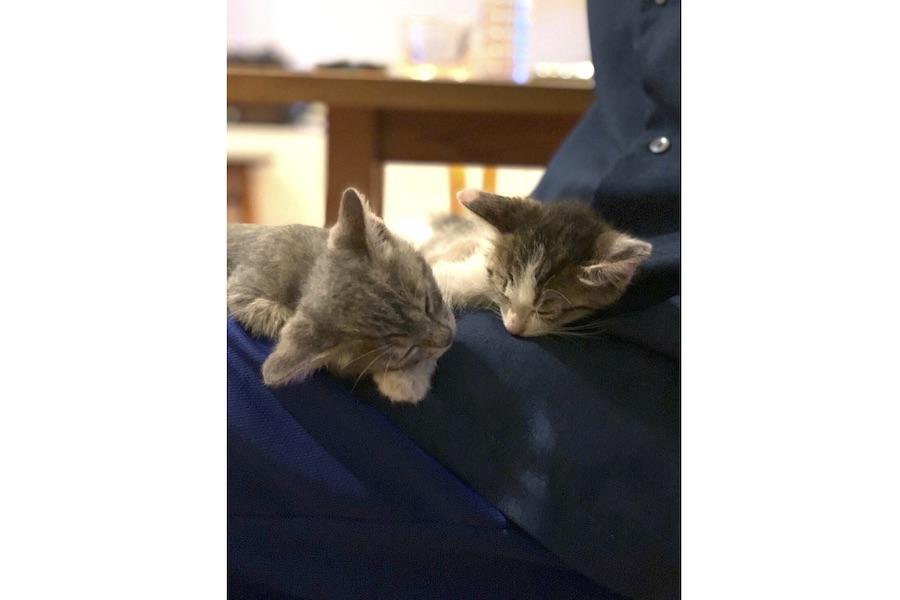 仲良し姉弟のなめろうくんとつみれちゃん。いつも寄り添うように一緒に寝るそう【写真提供:つみれとなめろう(@tsumire_namerou)さん】