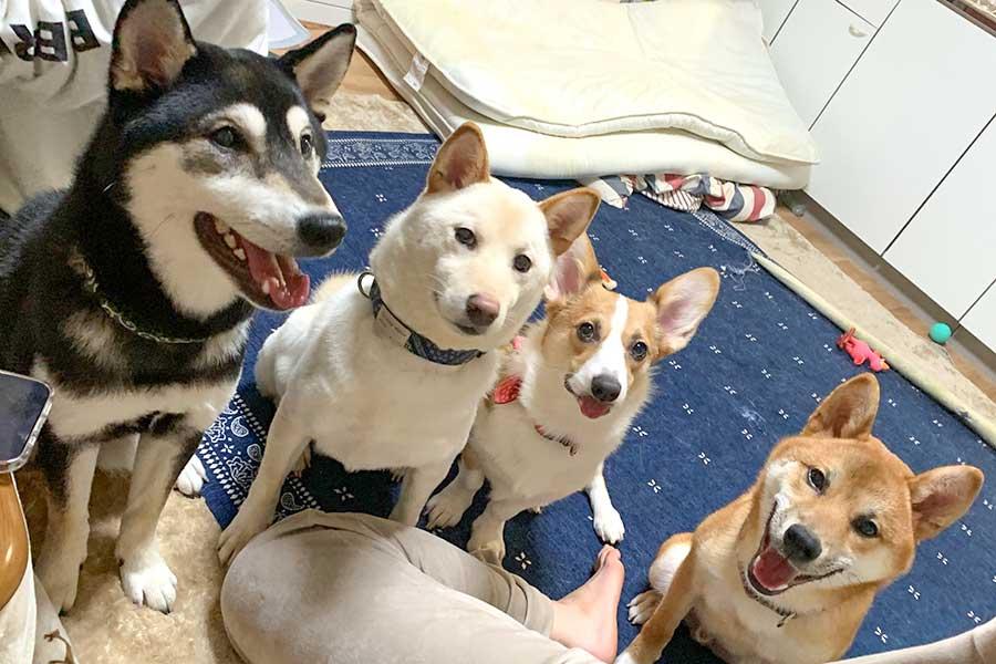 左からヨミくん、リタくん、モカちゃん、ロイくん【写真提供:ともぞう@犬猫屋敷(@shiba_inu_de)さん】
