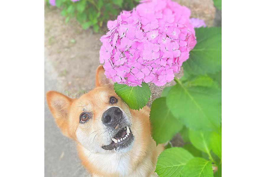 みんなを笑顔にする福くんのかわいい写真。だが鼻の下をよく見ると……【写真提供:FUKU(yoshino__017)さん】