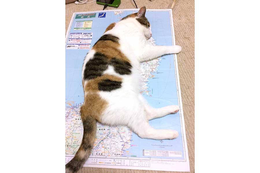 """東北地方に""""上陸""""して動かなくなったノースちゃん。地図はほとんど見えない……【写真提供:トラ兄(@cs_tora)さん】"""
