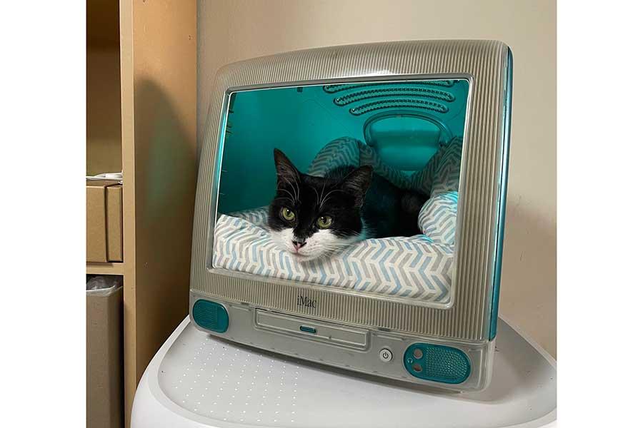 """初代iMacの""""中""""で満足げなふみちゃん。まさにジャストフィットです【写真提供:葉月 涙(@ruiH0815)さん】"""