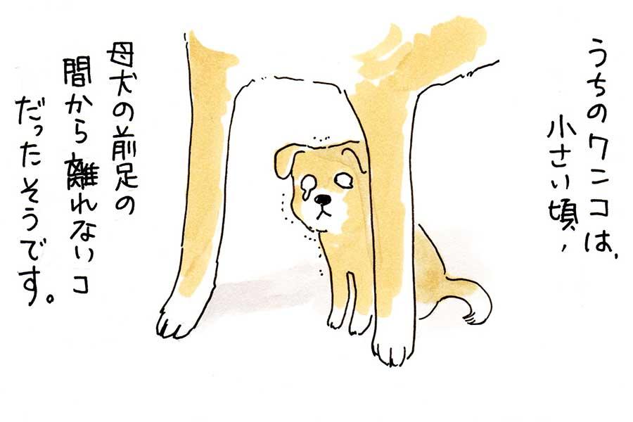 漫画のワンシーン【画像提供:ワンコ17歳(@wanco15sai)さん】