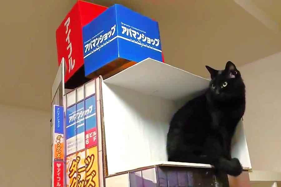 「新宿駅東口の巨大猫の3D動画」を完全再現(画像はスクリーンショット)