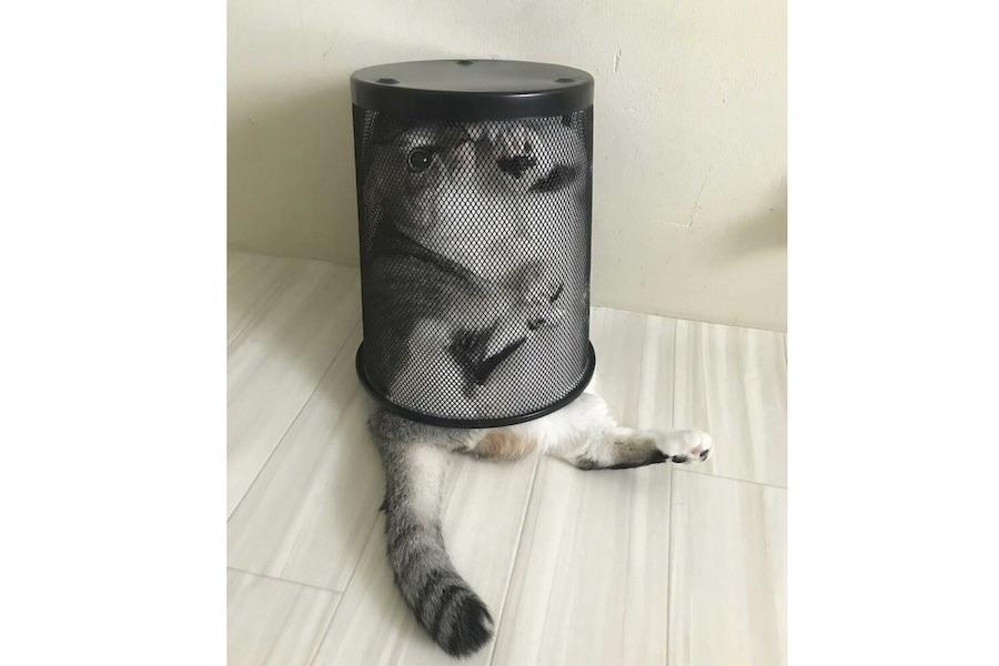 「ろくなことをしていない」と話題になったタイガくん【写真提供:Gomez-cat(@gomezcat7)さん】