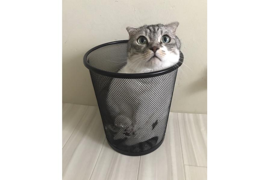 狭いところにむっちりボディを収めるのが大好き【写真提供:Gomez-cat(@gomezcat7)さん】