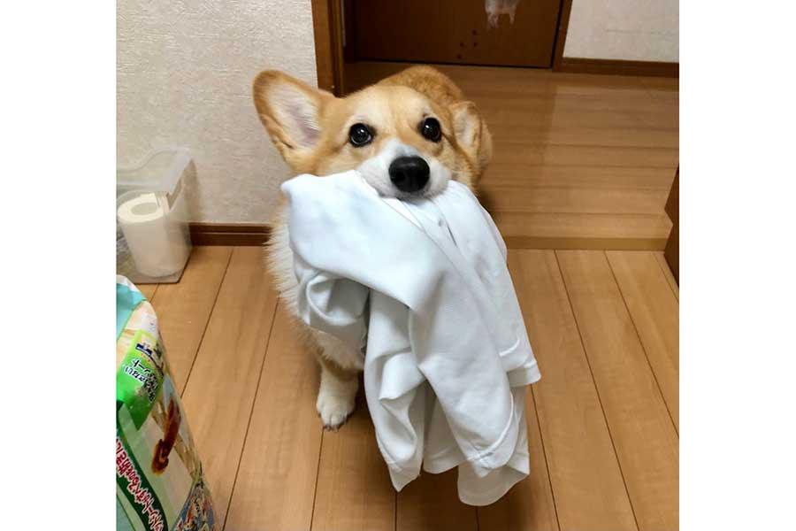 お父さんのTシャツも洗って!! 洗濯機の前で飼い主を見つめるベルちゃん【写真提供:しお(@BELL_1030)さん】