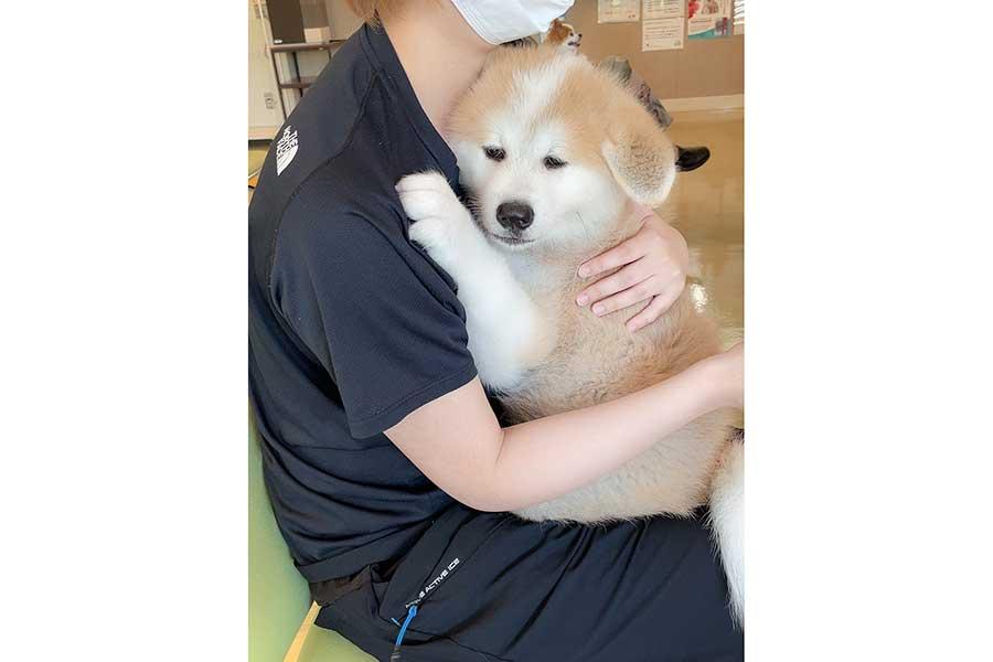 2度目の予防接種を前に絶望的な表情を見せるしおんくん【写真提供:秋田犬 しおん(@VytOONzRvz3KF59)さん】