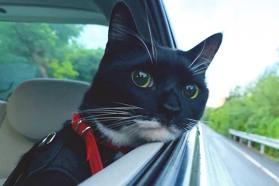窓枠にちょこんとアゴを乗せ、流れる景色に目をやるララちゃん【写真提供:石垣島のララ(@LalaTuube)さん】