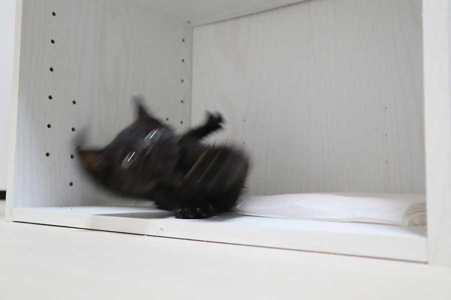 滑って慌てている黒ねこの様子。仮名は「コロ」ちゃん【写真提供:スペイクリニック北九州(@Spaykitaq)】
