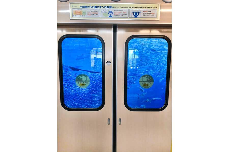 10万人が騒然とした一枚。車窓からブルーの海が広がっている【写真提供:江ノ島さんぽちゃん(@enoshimasanpo)】