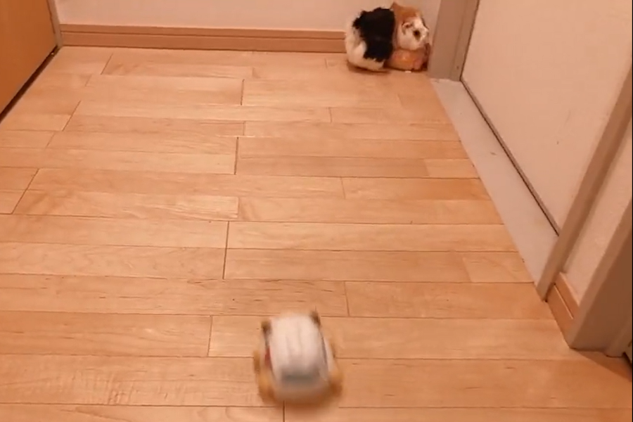 動画のワンシーン。部屋の隅でモルカーを抑え込むサボちゃん(写真はスクリーンショット)