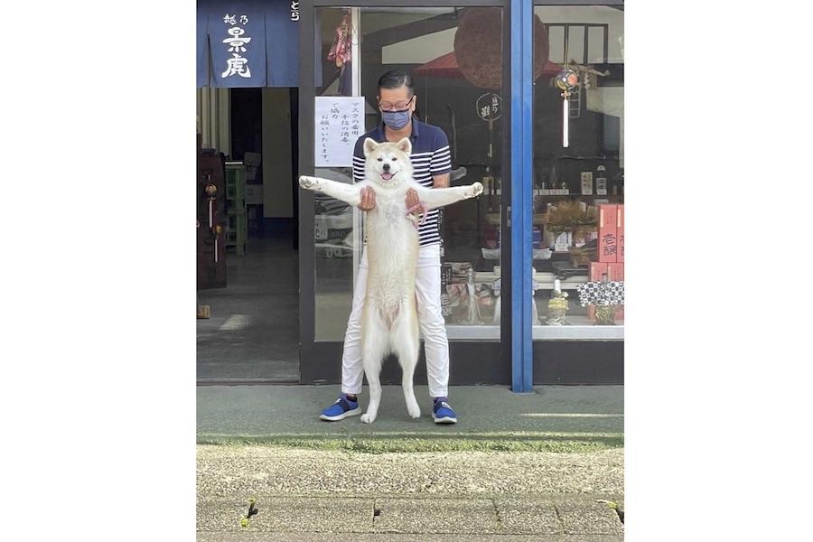 「いらっしゃい!」お父さんと一緒にお得意さんを迎える、秋田犬の優美ちゃん【写真提供:小林酒店(@kobasake_tochio)さん】
