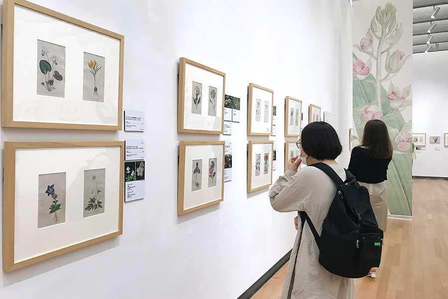 展示会場。ボタニカルアートと一緒に、自然教育園で咲く花の写真も並ぶ【写真:Hint-Pot編集部】