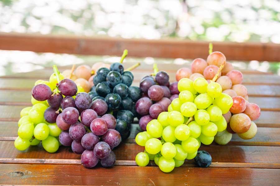 品種がたくさんあるブドウ(写真はイメージ)【写真:写真AC】